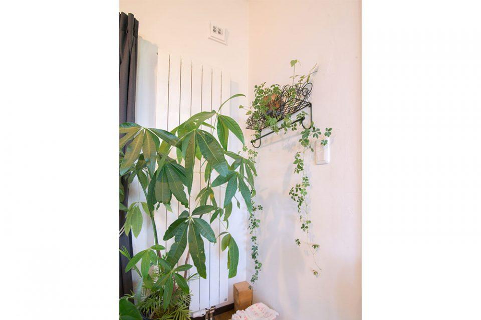 リビングの観葉植物の奥にはもちろんパネルヒーター