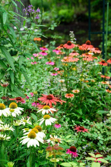 ハンナフラガーデンの花々