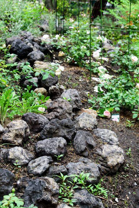 溶岩石もアクセントのひとつ