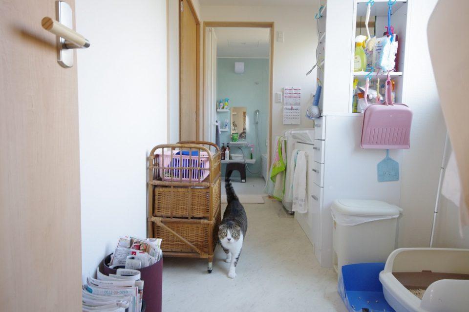 内装:洗面所の様子。お家には猫ちゃんが2匹います