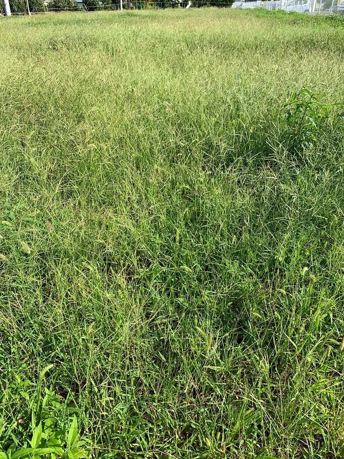 取引できないとわかった土地。まさに「草が生えます」…