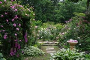 バラの最盛期のころのお庭